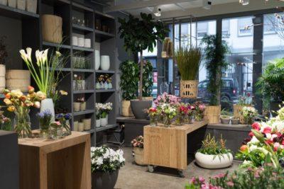Pflanzen-Darmstadt-fleur-in